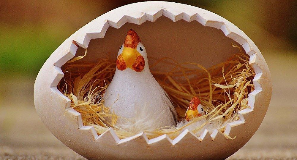 ¿Qué fue primero: el huevo o la gallina? - 6