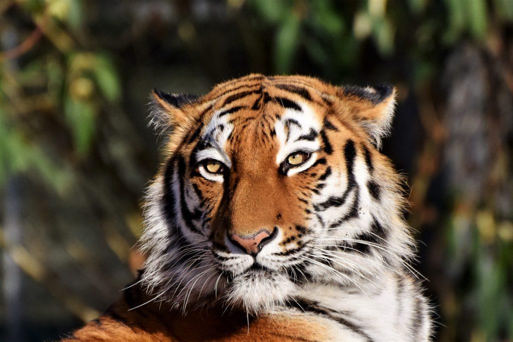 Los 6 animales más peligrosos del mundo