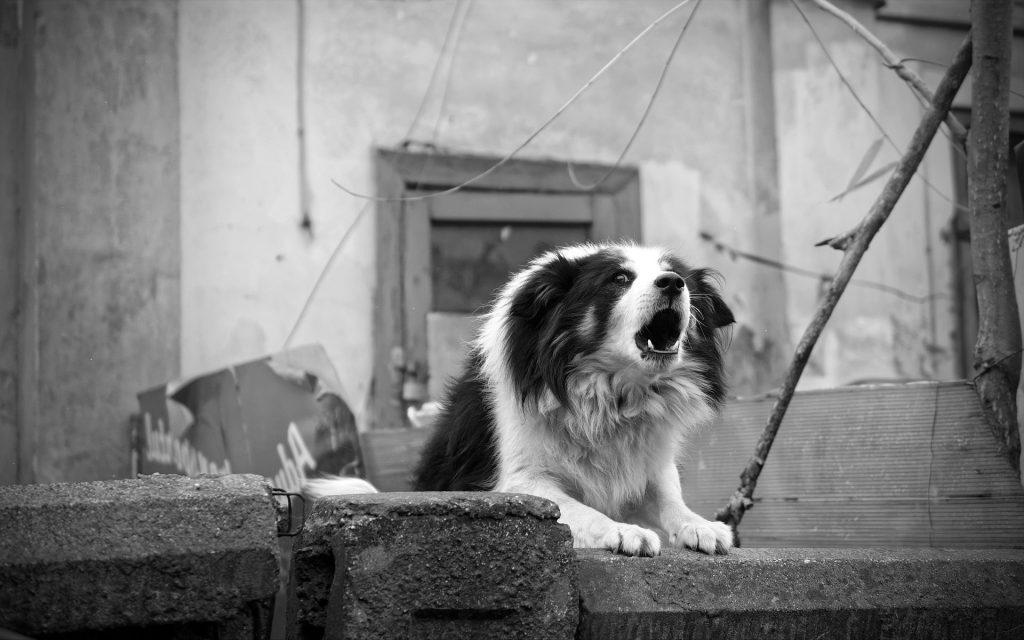 Comportamiento perro 3