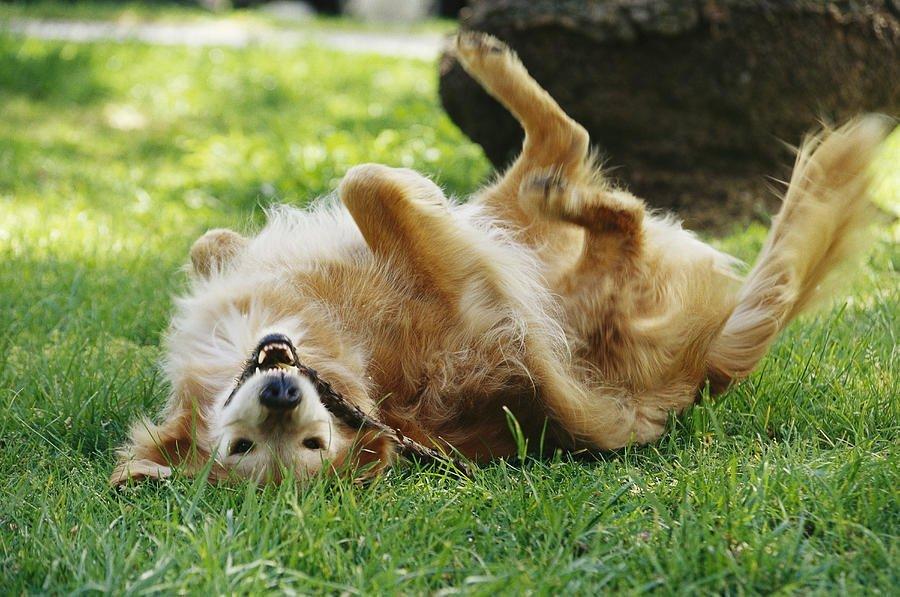 ¿Por qué tu perro tiene ese comportamiento? III - 1