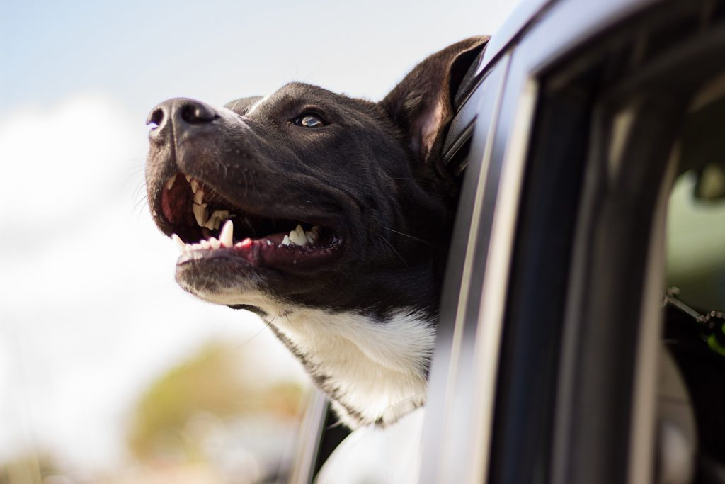 ¿Por qué tu perro tiene ese comportamiento? III
