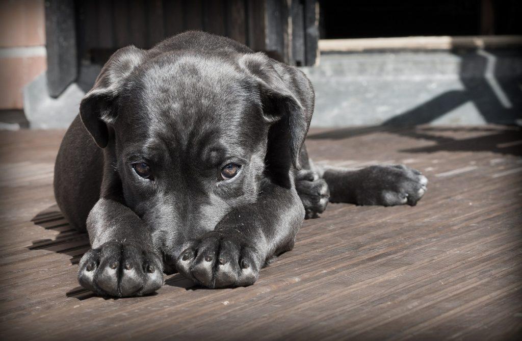 ¿Por qué tu perro tiene ese comportamiento? II