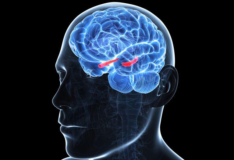 ¿Se pueden regenerar las neuronas? - 2