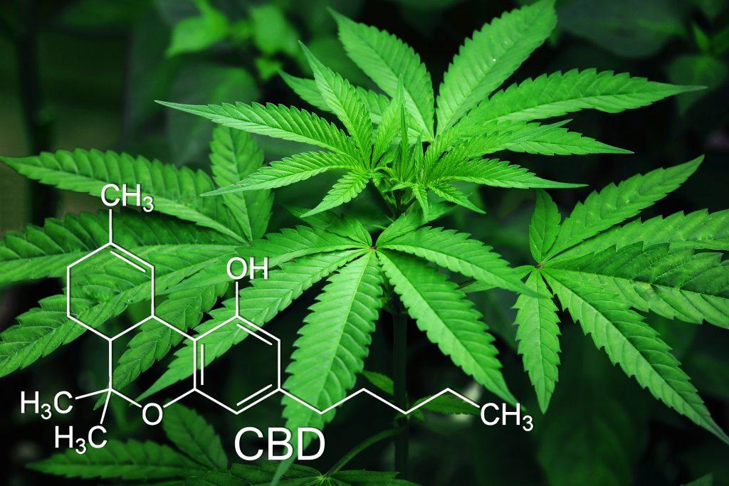 Beneficios del consumo de la Marihuana - 1