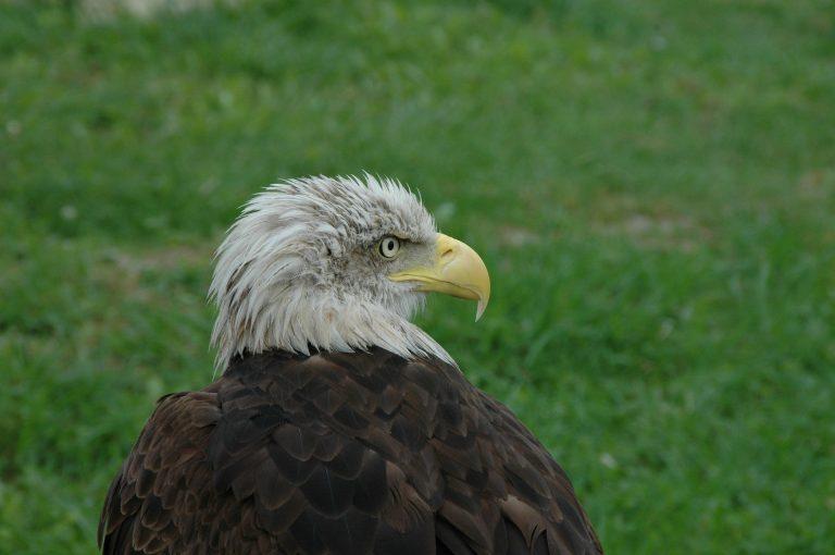 Águila: El señor del cielo - 3
