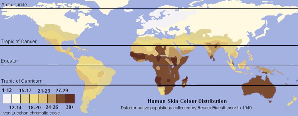 ¿Por qué tenemos distintos tonos de piel? - 6