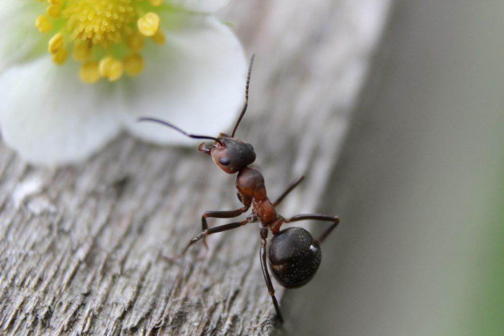 La importancia de las hormigas - 2