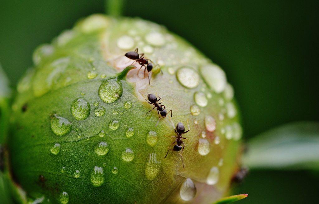 La importancia de las hormigas - 3