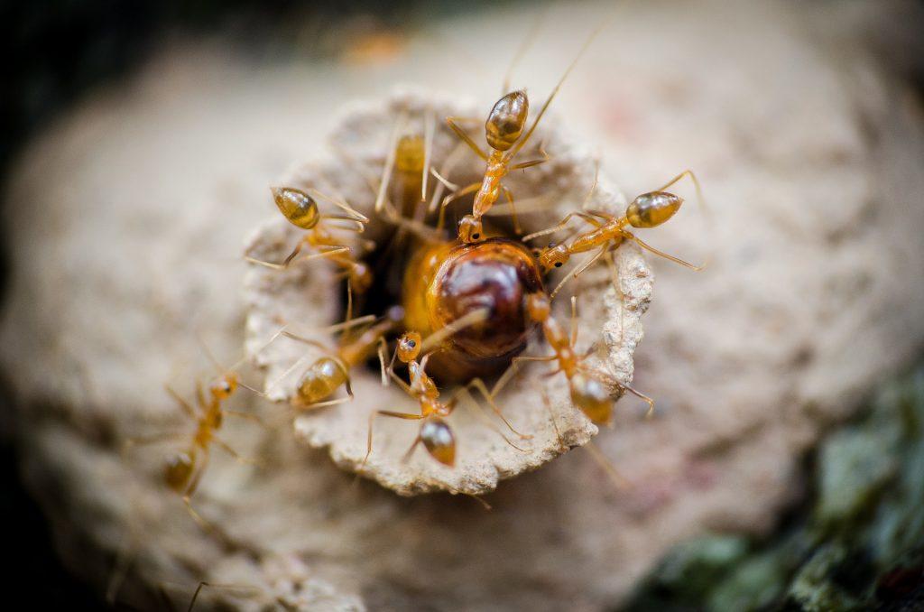 La importancia de las hormigas - 4