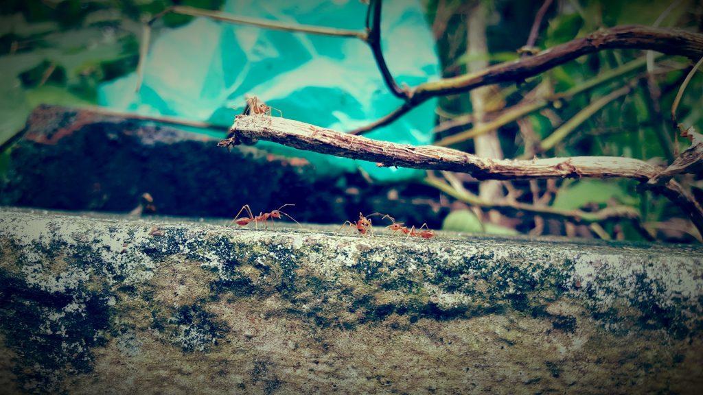 La importancia de las hormigas - 5