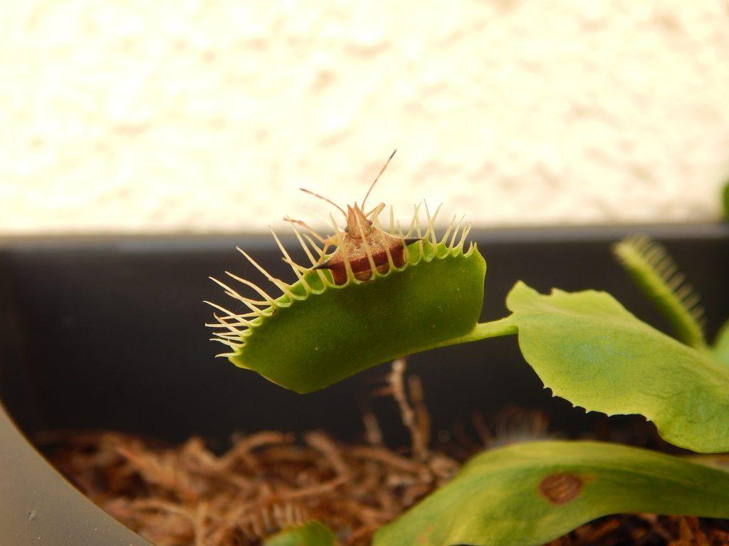 las plantas más venenosas del mundo 6