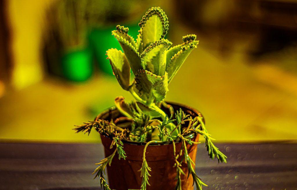 3 plantas carnívoras que puedes tener en casa 1