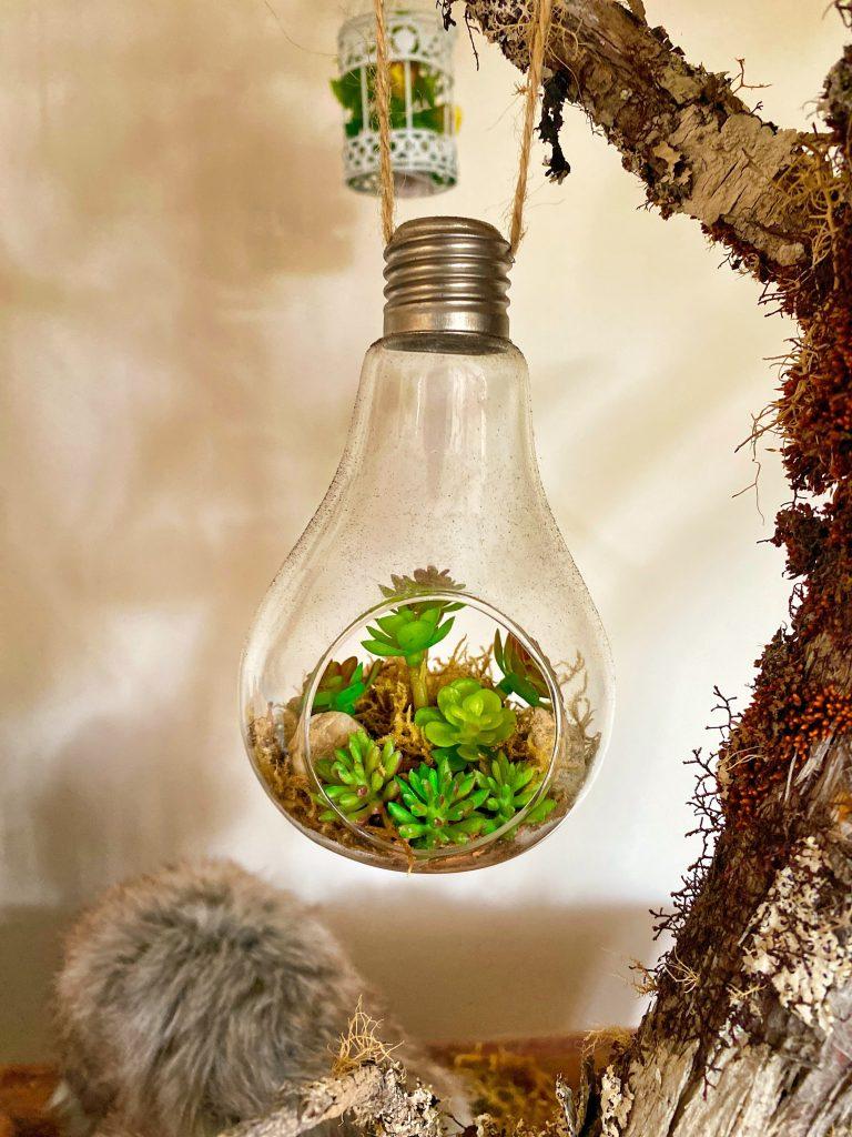 3 plantas carnívoras que puedes tener en casa main